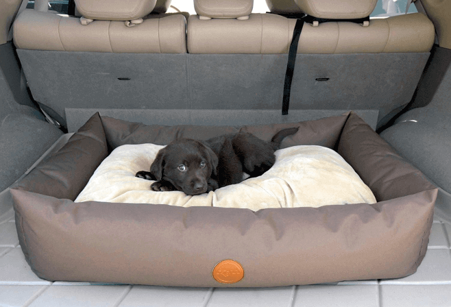 car accessories for dog owners