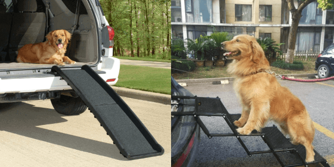 most essential dog car travel accessories you must have