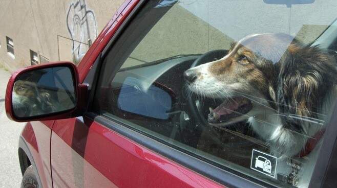 how to keep a dog cool in a car