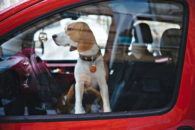 how to keep your dog cool in the car