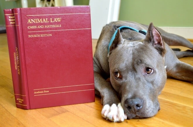 laws that deal with animals left in unattended vehicles